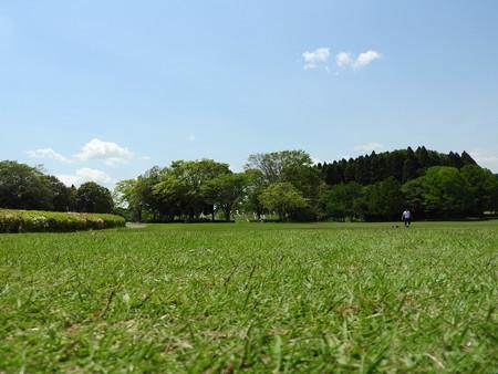 昭和の森49