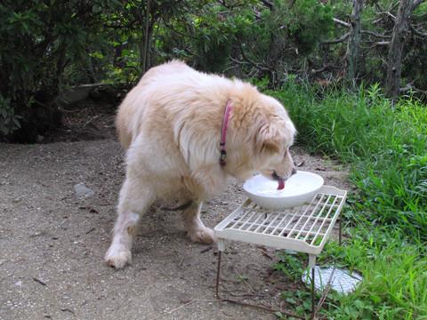 写真: お水も飲む