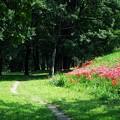 土手と林と彼岸花