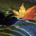 秋の揺らぎ