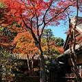 紅葉のある庭