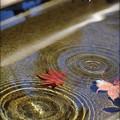 Photos: 秋の雫