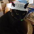 写真: hi-ragiさま帽子~ノエル