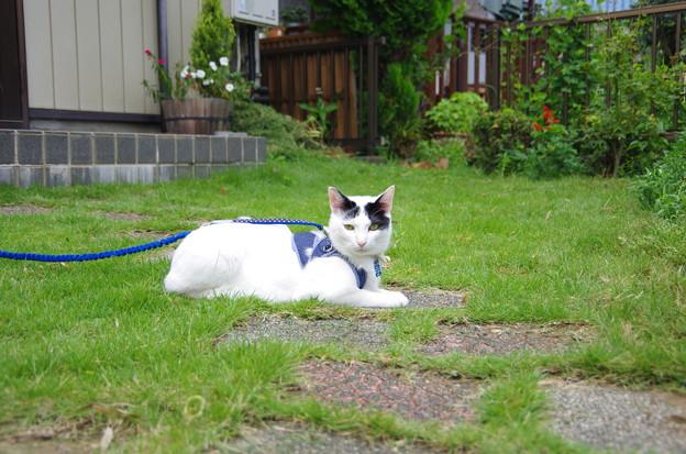 写真: 芝生でゆったり