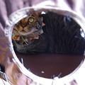 写真: 穴から見てみた