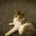 猫@八丁湖