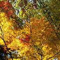 写真: 太宰府近くの竈門神社の紅葉
