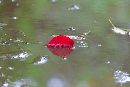2014.07.10 和泉川 水たまり