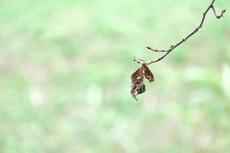 2014.10.09 和泉川 サクラ