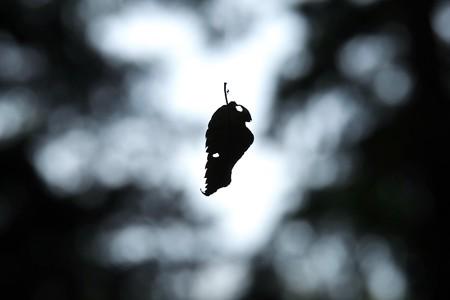 2014.10.26 追分市民の森 枯葉