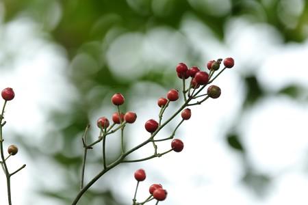 2015.10.10 和泉川 野薔薇