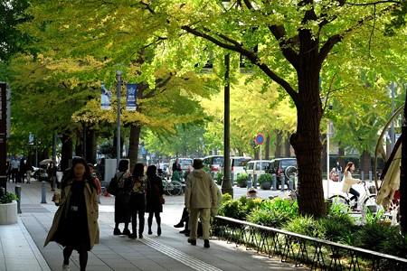 2015.11.19 みなとみらい 日本大通 イチョウ