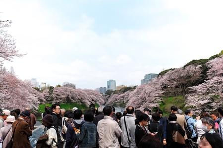 2016.04.01 千鳥ヶ淵 撮影ポィント