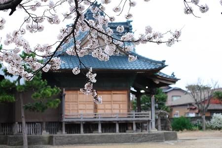 2016.04.07 新潟 諏訪神社