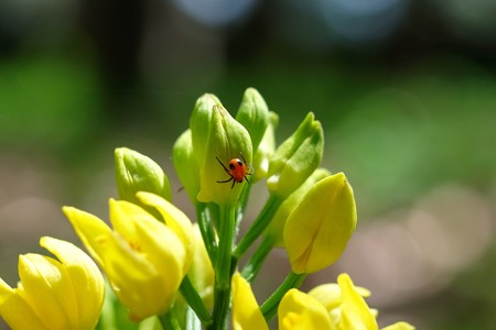 2016.04.19 瀬谷市民の森 キンランにシロスジショウジョウグモ