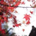 京都 赤山禅院にて