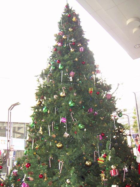 今年のROX前のツリー 1