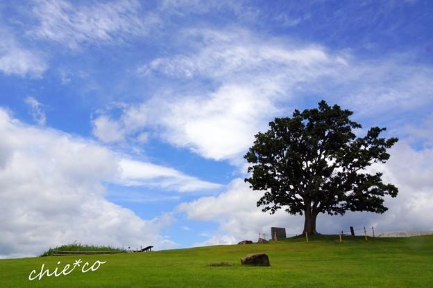 吾妻山公園-050