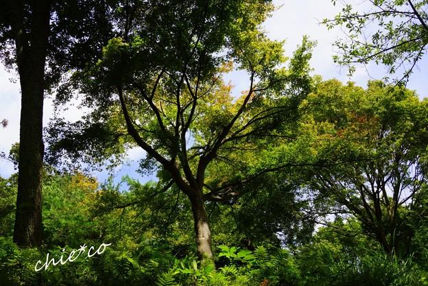 吾妻山公園-154