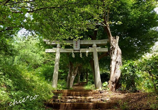吾妻山公園-018