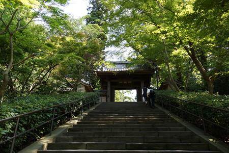 長月の円覚寺-004