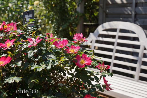 花菜ガーデン-249
