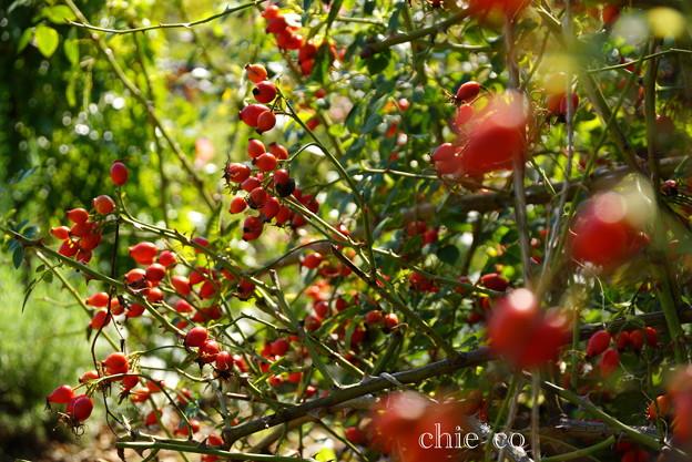 花菜ガーデン-251