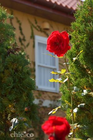花菜ガーデン-253