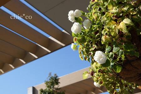 花菜ガーデン-270