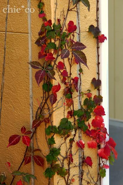 花菜ガーデン-293