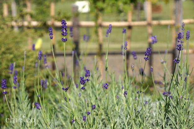 花菜ガーデン-294