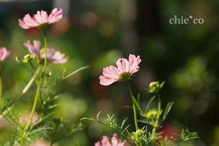 花菜ガーデン-311
