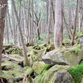 Photos: 白駒池-319