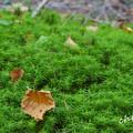 Photos: 白駒池-324