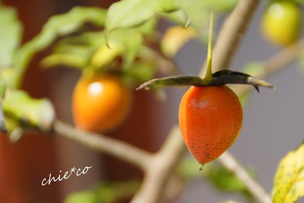 老爺柿(ろうやがき)・・
