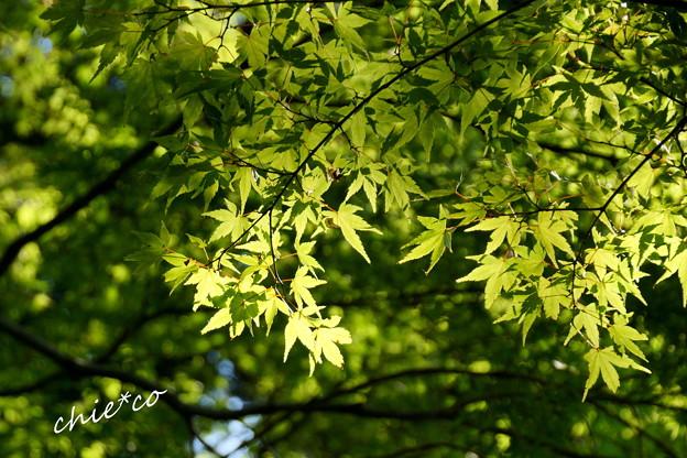 Photos: 北鎌倉-250