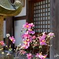 Photos: 北鎌倉-252