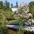 Photos: 北鎌倉-282