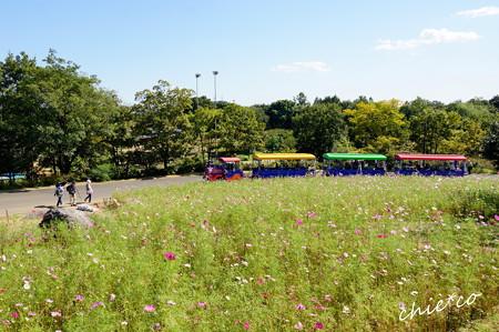 昭和記念公園-378