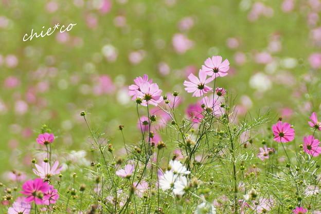 昭和記念公園-384
