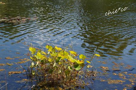 昭和記念公園-425