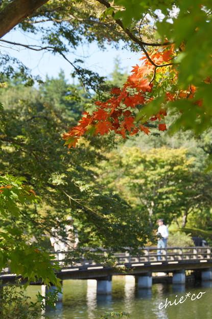 昭和記念公園-419
