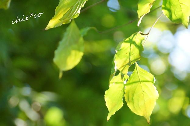 昭和記念公園-436