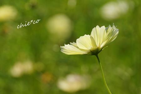 昭和記念公園-441