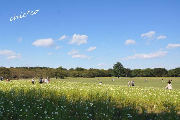 昭和記念公園-452