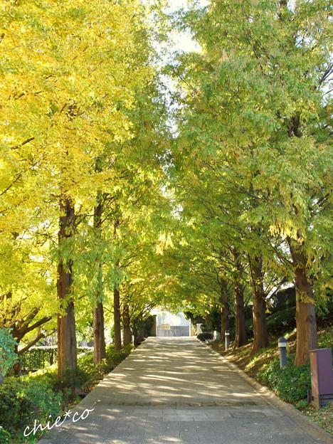 イタリア山庭園-175