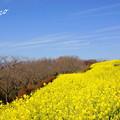 写真: 吾妻山公園-142