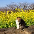 写真: 吾妻山公園-144