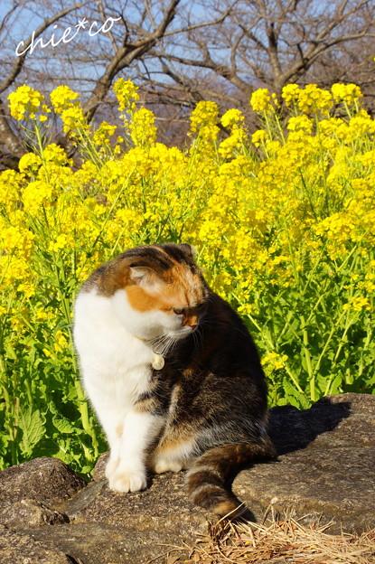 写真: 吾妻山公園-147