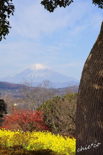 吾妻山公園-150